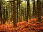 İnegöl Ormanları
