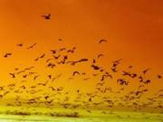 Bandırma Kuş Cenneti