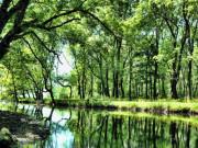 İğneada Ormanları