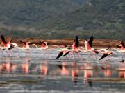 Boğaziçi Tuzla Gölü