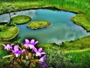 Bingöl Yüzen Ada