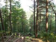Asarkaya Milli Parkı