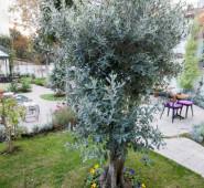 Tuzla Garden Hotel & Spa